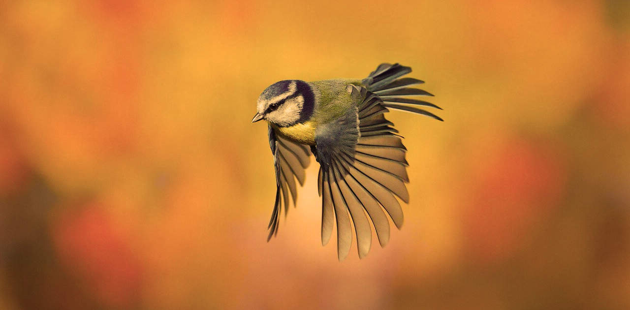 Hermosa ave volando