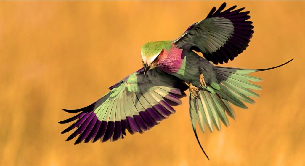 aves exoticas nunca vistas