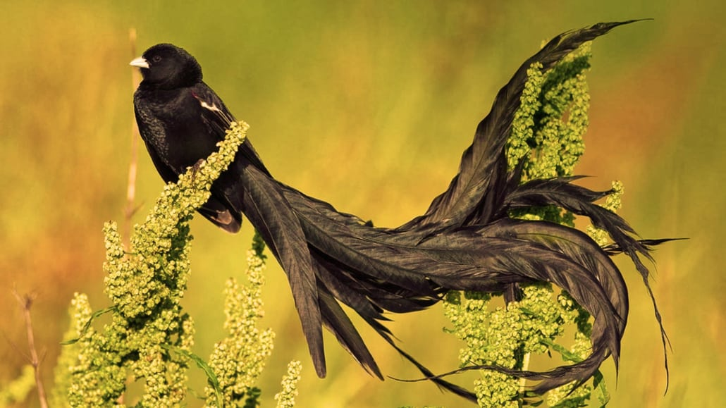 Hermoso pájaro exótico